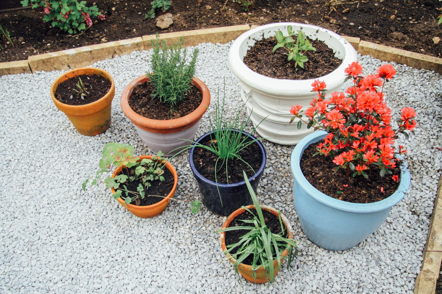 Colourful pots with plants